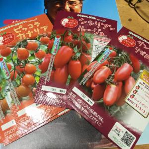 tomato_tane