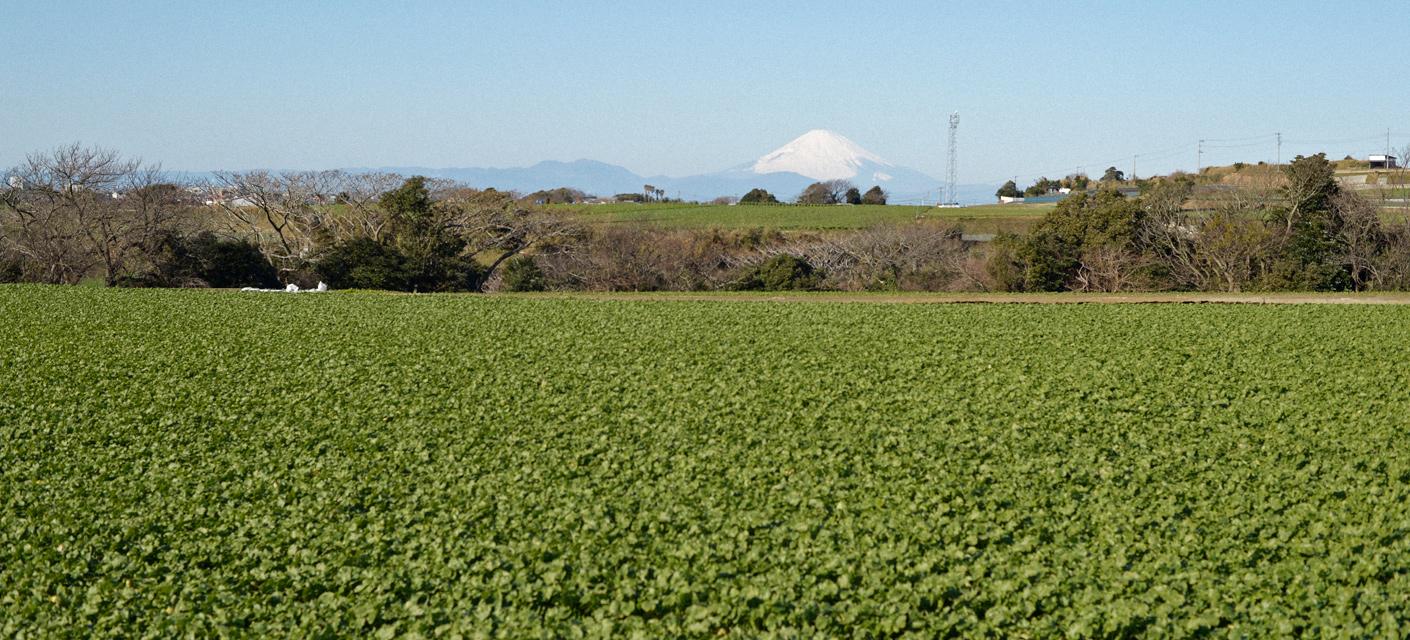 川島農園について