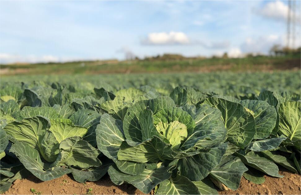 丸徳農産野菜