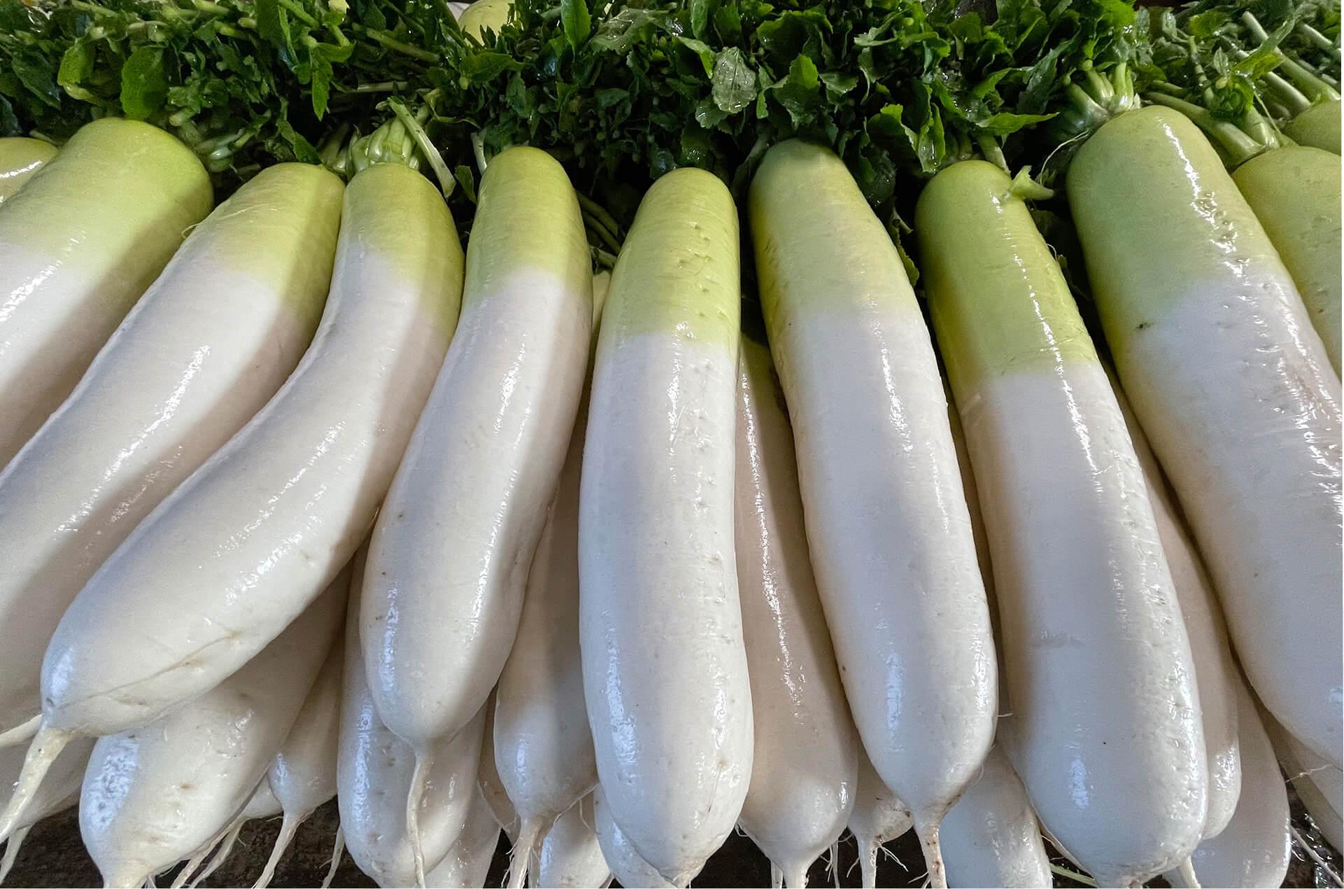 めぐみ野菜とまぐろ肥料